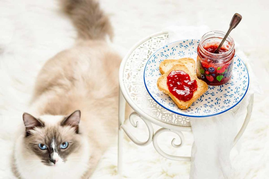 Breakfast with my cat